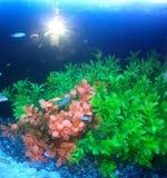 Prachtige onderwaterbetekenis Stock Afbeelding