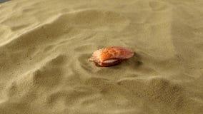 Prachtige overzeese shell, roze, op zand, schaduw stock videobeelden