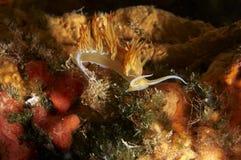 Prachtige sinaasappel van de steel verwijderde slak Stock Afbeeldingen