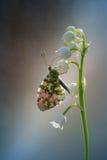 Prachtige smaak van nectar Stock Foto