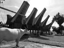 Prachtige Toraja Royalty-vrije Stock Foto's