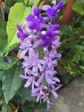 Prachtige vers van de bloemen purpere schoonheid stock foto's
