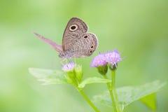 Prachtige Vlinder op grasbloemen met groene achtergrond Stock Fotografie