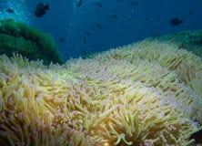 Prachtige zeeanemoon royalty-vrije stock fotografie