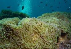Prachtige zeeanemoon royalty-vrije stock afbeelding