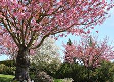 Prachtvoller Frühling stockfotografie