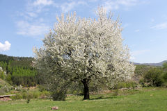Prachtvoller Frühlingsbaum stockbild