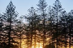 Prachtvoller Sonnenuntergang, der durch die Bäume hinaufklettert lizenzfreies stockfoto