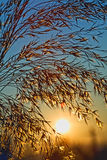 Prachtvoller Tag - sonnen Sie das Steigen auf einen kühlen Sommermorgen Lizenzfreie Stockfotografie