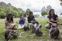 PRACHUAPKHIRIKHAN - 24. SEPTEMBER: Fütterungsnuß des thailändischen Besuchers und Stockfotografie