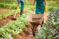 Pracować na plantaci obrazy royalty free