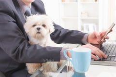 Pracować z psem w biurze zdjęcie stock
