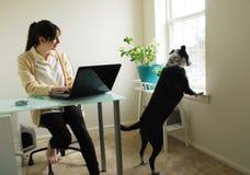 Pracować w domu zakłócenie spokoju Zdjęcia Stock