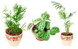 pracowniane kolekcj rośliny odosobnione ofdifferent Zdjęcia Royalty Free