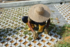 Pracownicy budowlani zasadza trawy między betonowym blokiem Zdjęcia Stock