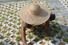 Pracownicy budowlani zasadza trawy między betonowym blokiem Zdjęcie Stock
