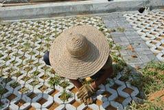 Pracownicy budowlani zasadza trawy między betonowym blokiem Fotografia Stock