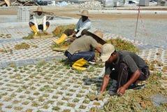 Pracownicy budowlani zasadza trawy między betonowym blokiem Obraz Stock