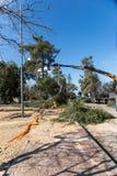 Pracownicy ciący puszków drzewa z żurawiem Obraz Royalty Free