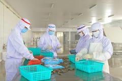 Pracownicy pracuje w krewetki przerobowej linii w owoce morza procesach Zdjęcia Royalty Free