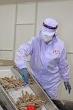 Pracownicy pracuje w krewetki przerobowej linii w owoce morza procesach Fotografia Stock