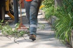 Pracownik grabije w górę cięcia rozgałęzia się i opuszcza na chodniczku na słonecznym dniu Zdjęcia Royalty Free