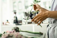 Pracownik kwiecisty sklep używać specjalnych nożyce podczas gdy ciący trzon roślina zdjęcia stock