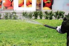 Pracownik od miasto usługa podlewania gazonu kwiatów na kwiatów łóżkach w mieście St Petersburg i trawy Obraz Stock
