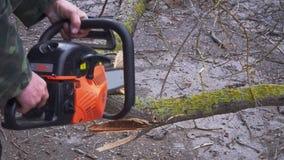 Pracownik piłuje dużą gałąź drzewo z piłą łańcuchową w górę zbiory