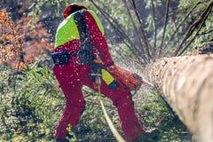 Pracownik powalać drzewa z piłą łańcuchową Fotografia Stock