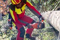 Pracownik powalać drzewa z piłą łańcuchową Zdjęcie Royalty Free