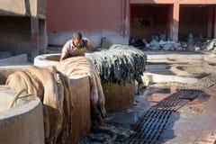 Pracownik w Rzemiennej tradycyjnej garbarni Marrakech Maroko Obrazy Royalty Free