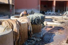 Pracownik w Rzemiennej tradycyjnej garbarni Marrakech Maroko Zdjęcia Stock