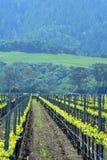 Pracownik w vinery Obraz Royalty Free