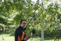 Pracownika arymażu orzecha włoskiego Niskie Łgarskie Drzewne kończyny Obrazy Royalty Free