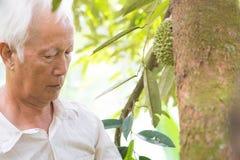 Pracownika i durian drzewo zdjęcie royalty free