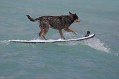 Practicar surf las ondas imagen de archivo libre de regalías