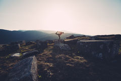 Practicing yoga in nature stock images