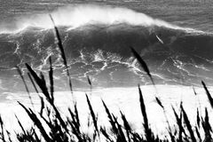 Practique surf a un monstruo Fotografía de archivo