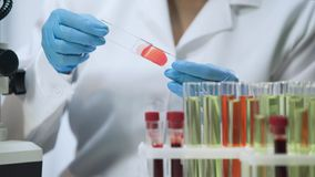 Practitioner doing bacteriological analysis of blood at laboratory, close-up. Stock footage royalty free stock images