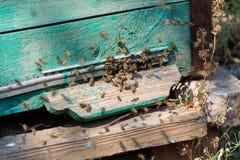 Pracująca pszczoła Zdjęcie Stock