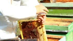 Pracujący apiarist zbiory