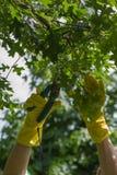 Pracujący w ogródzie, ogrodowa opieka Fotografia Stock