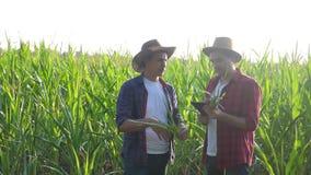 Pracy zespołowej pojęcia zwolnionego tempa mądrze uprawia ziemię wideo Dwa mężczyzny agronoma chwytów pastylki dotyka ochraniacza zbiory
