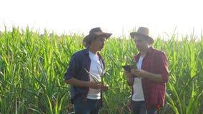 Pracy zespołowej pojęcia zwolnionego tempa mądrze uprawia ziemię wideo Dwa mężczyzny agronoma chwytów pastylki dotyka ochraniacza zdjęcie wideo