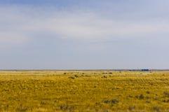 Pradaria perto dos ribeiros, Alberta, Canadá Fotografia de Stock Royalty Free