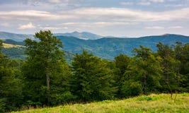 Pradawny bukowy las Karpackie góry fotografia royalty free