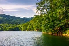 Pradawny bukowy las nad Morske Oko jeziorem zdjęcia royalty free