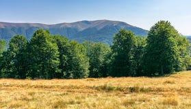 Pradawny bukowy las w górach obraz stock