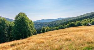 Pradawny bukowy las w g?rach fotografia royalty free